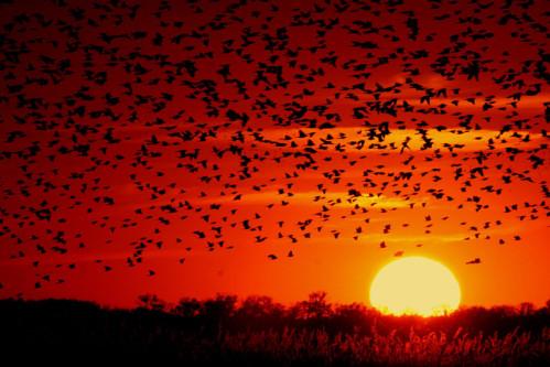 coucher de soleil avec les papillons