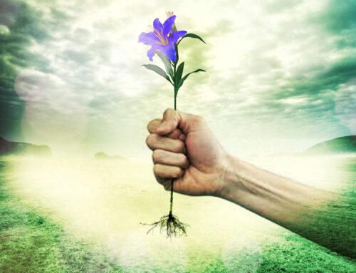 Fleur de Lys Bleu